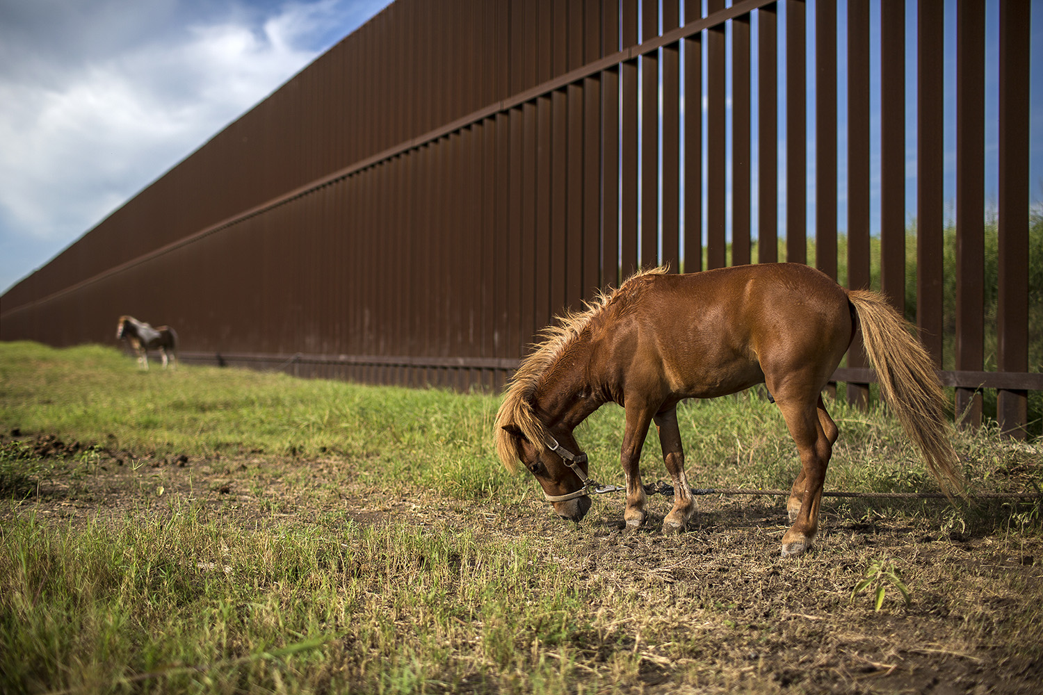 Ponies graze next to the border fence in Cameron County, Texas. The federal government seized residents' property across the Rio Grande Valley to build the fence a decade ago.