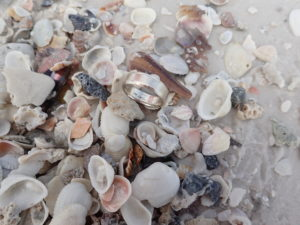 metal+detector+found+club+lost+ring+jewelry+tampa+St Pete Beach+Clearwater+Treasure Island (2)