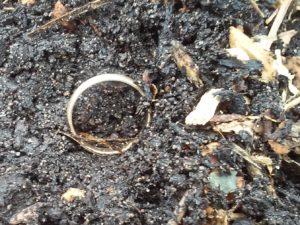 toms-ring-2