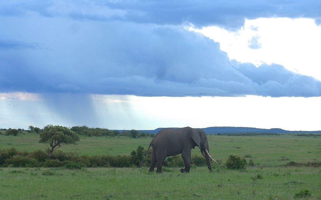 Since Eric Young helped start the Conservancy Project, animals are returning to the savanna. (Nora Nord)