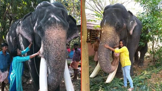Image result for shabna sulaiman mahout