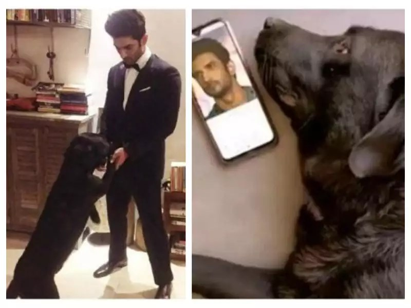 Rumours of Sushant Singh Rajput's dog Fudge passing away are NOT true
