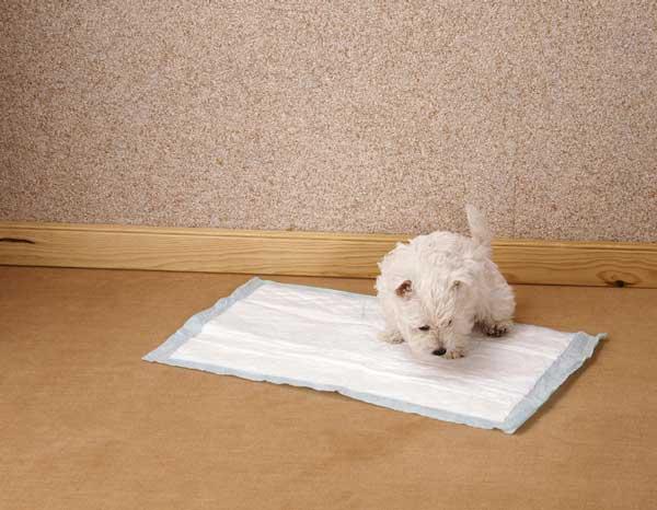 tapis d education pour chien