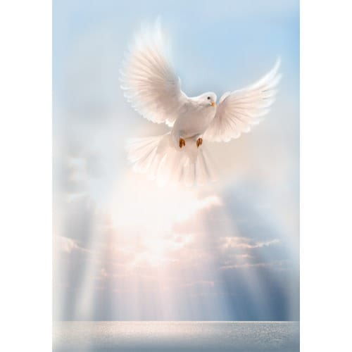 White Dove Personalized Prayer Card Priced Per Card The Catholic Company