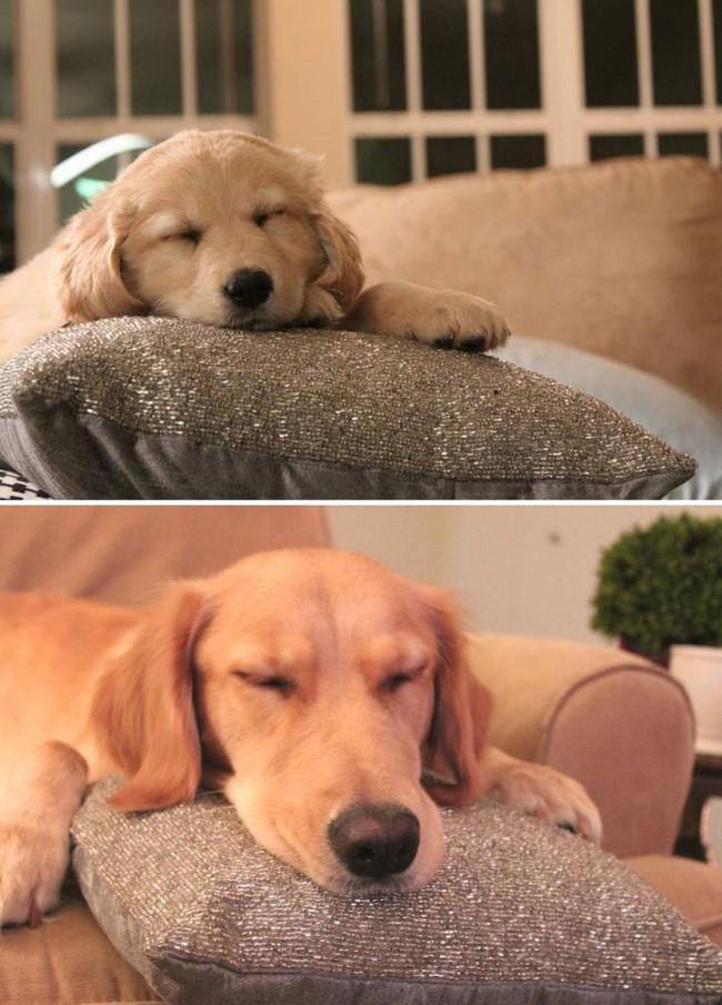 antes-e-depois-cachorros-16