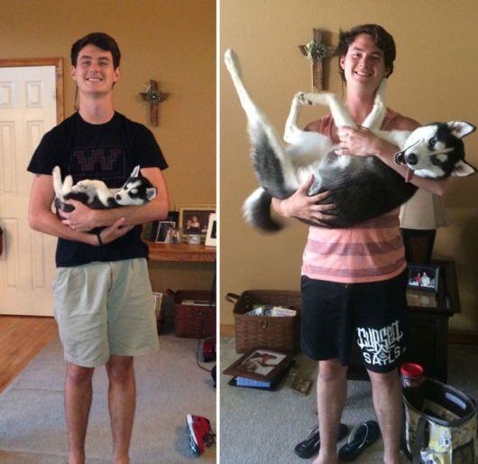 antes-e-depois-cachorros-19