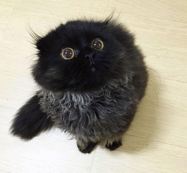 gimmo-gato-12