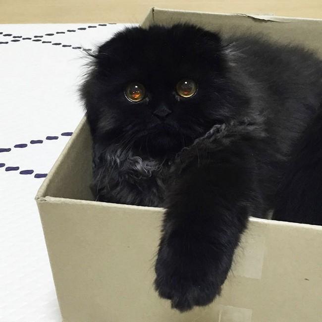 gimmo-gato-15