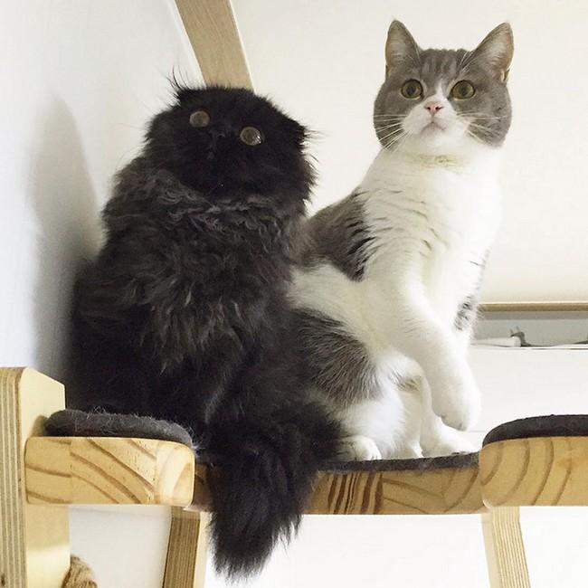 gimmo-gato-4