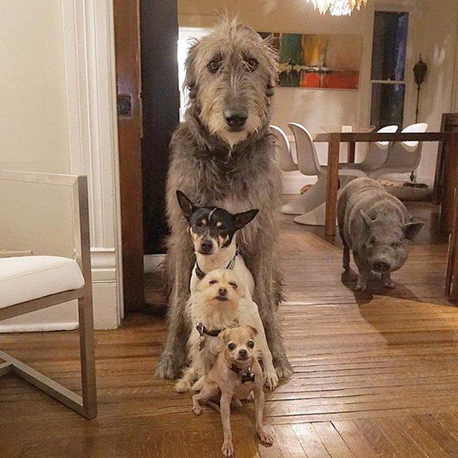 homem-adota-cachorros-idosos-11