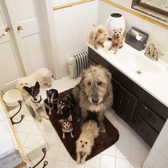 homem-adota-cachorros-idosos-14
