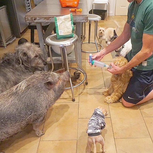 homem-adota-cachorros-idosos-5