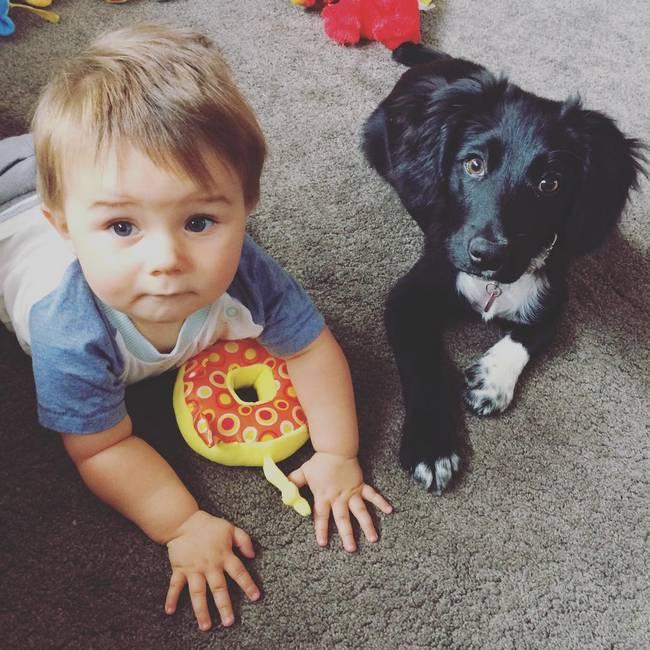 cachorro-crianca-2