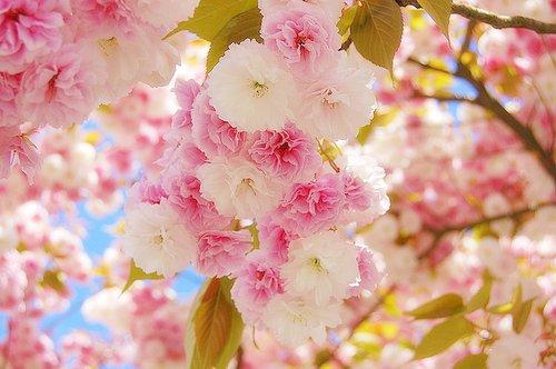 Pink Tumblr Theme Floral
