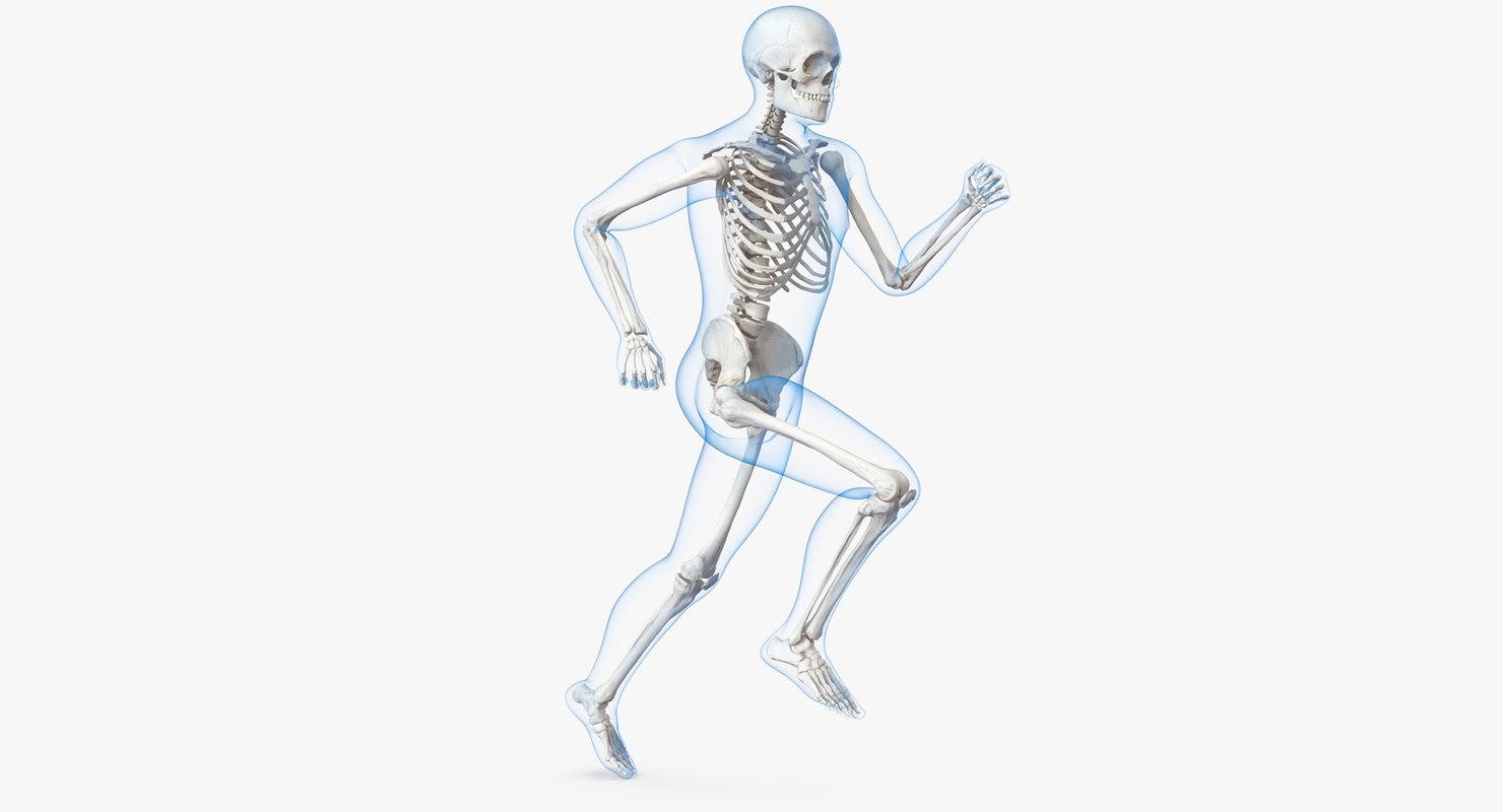 Male Body Skeleton Running 3d Model