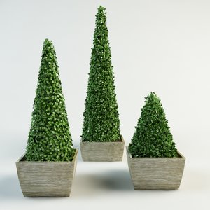 Boxwood 3d Models For Download Turbosquid