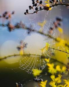 jekylla_spiderweb