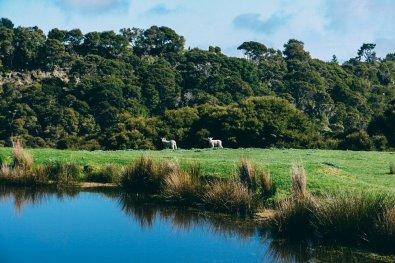 Reiseziele 2017 Neuseeland 5