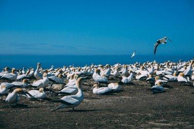 Reiseziele 2017 Neuseeland 9