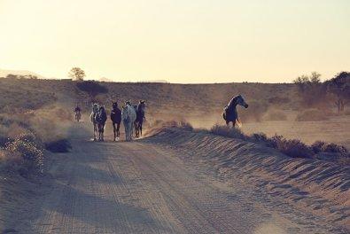 Wüstenpferde Namibia