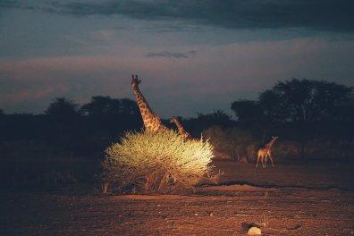 Kalahari (15 von 15)