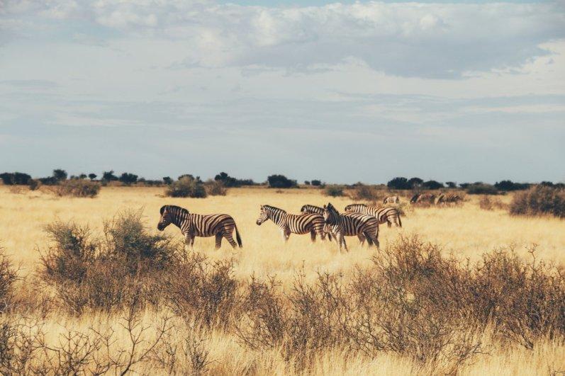 Kalahari (4 von 15)