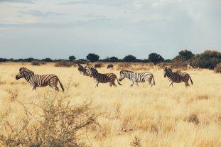 Kalahari (5 von 15)