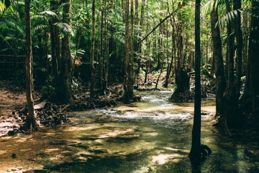 Krabi Jungle tour