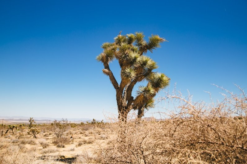 California Roadtrip Roserbrother-129