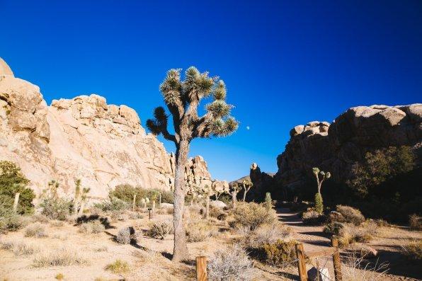 California Roadtrip Roserbrother-160