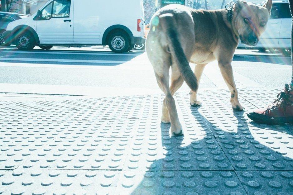 Bilbao Hund