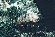 Nest Niyama