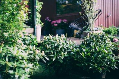 Schrebergarten Deluxe Pflanzenfreude