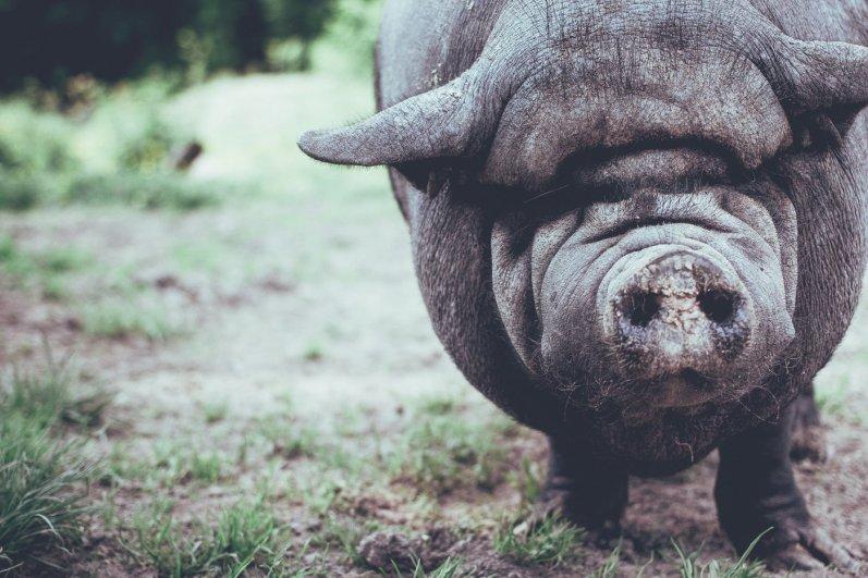 bedrohte Tiere retten