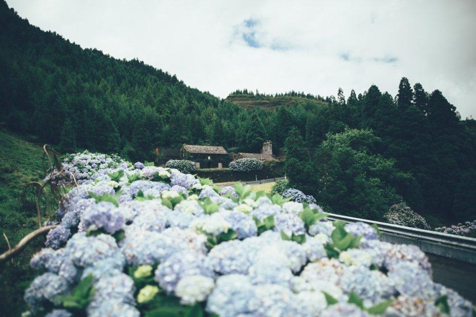 Flora & Fauna auf den Azoren