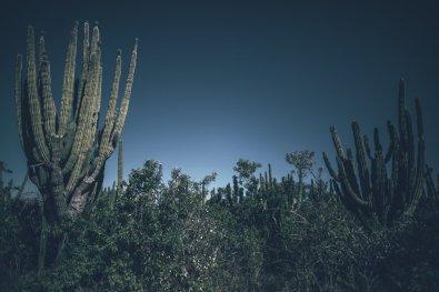 Wildwest Feeling in der Baja California