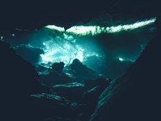 Der Regenwald aus Froschperspektive