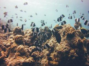 Unterwasserwelt auf den Malediven