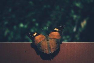 Schmetterlinge in Entopia