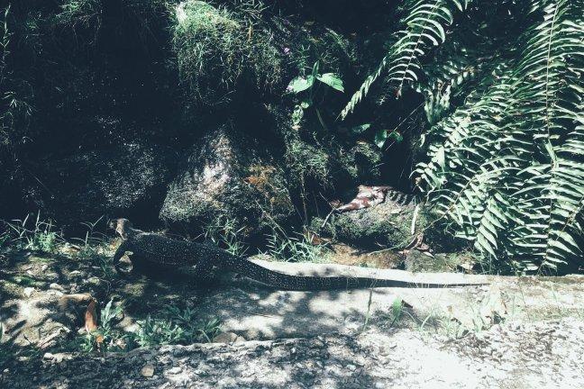 Fauna im Tropical Spice Garden