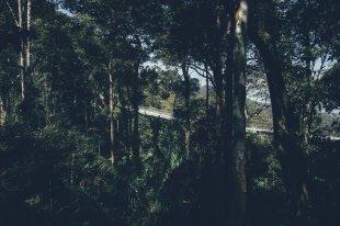 Hängebrücke im Penang Hill Habitat