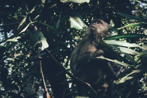 Neugierigen Affen durchwühlen gerne mal offene Taschen nach Futter!