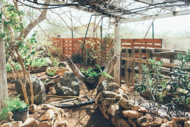 Curacao: Curacao: Dinah Veeris Kräutergarten