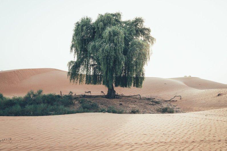 Wildlife in der Wüste Dubais