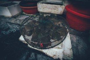 Kröten auf dem Straßenmarkt von Hanoi