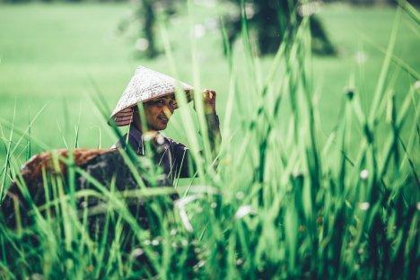 Reisbauern bei Sapa