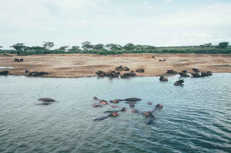Wildlife im Queen-Elizabeth-Nationalpark