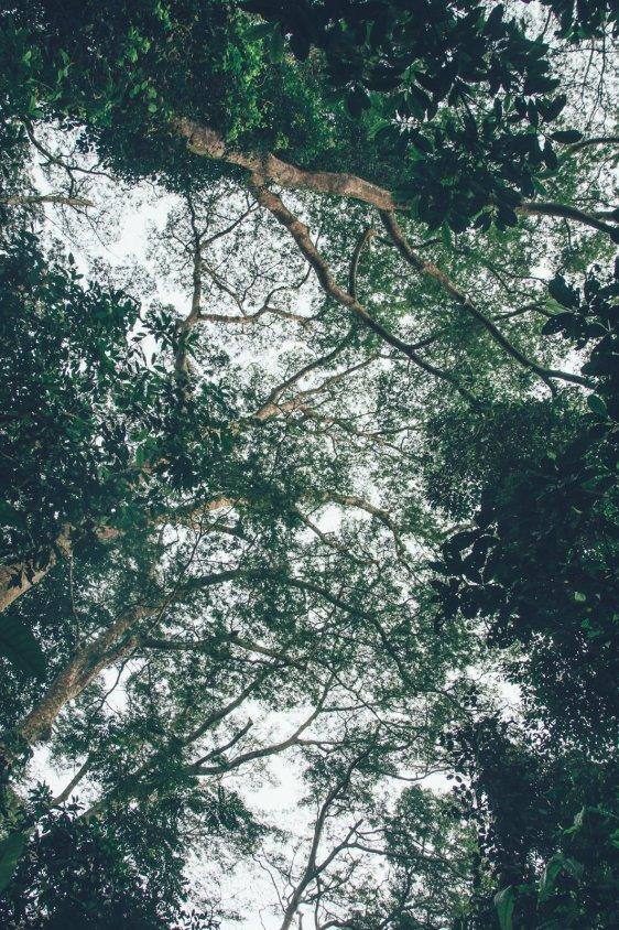 Regenwälder Ugandas