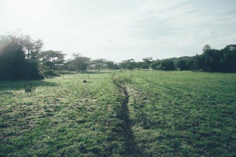 sWildlife im Mburo Nationalpark