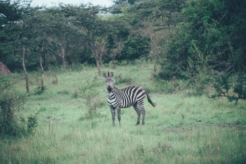 Wildlife im Mburo Nationalpark